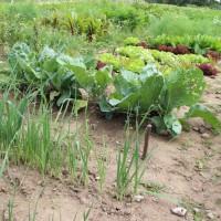 Dein Gemüsegarten - Gut Birkenmoor