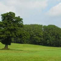 Gut Birkenmoor
