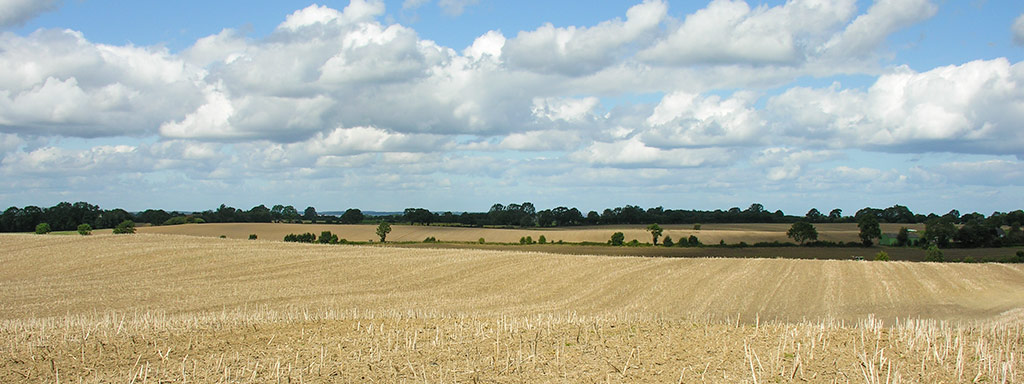 Gut Birkenmoor - Felder